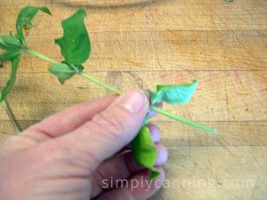 Pulling herb leaves off herb stems by hand.