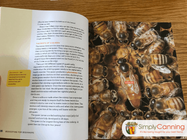 Interior page with an image of honeybees clustered around their queen bee.
