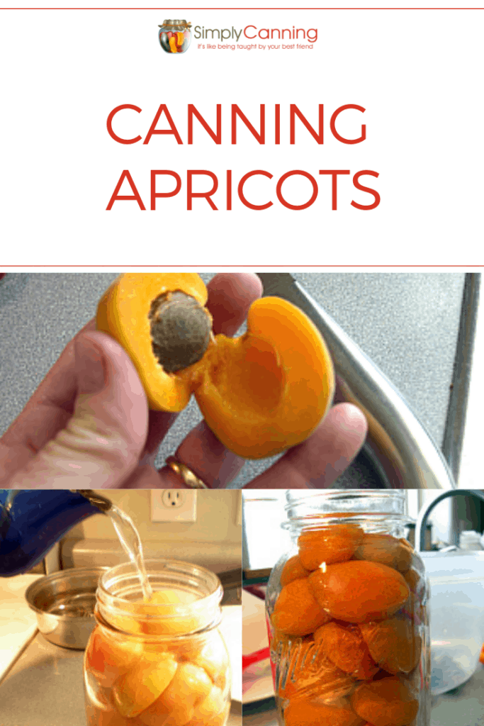 Canning apricots pin
