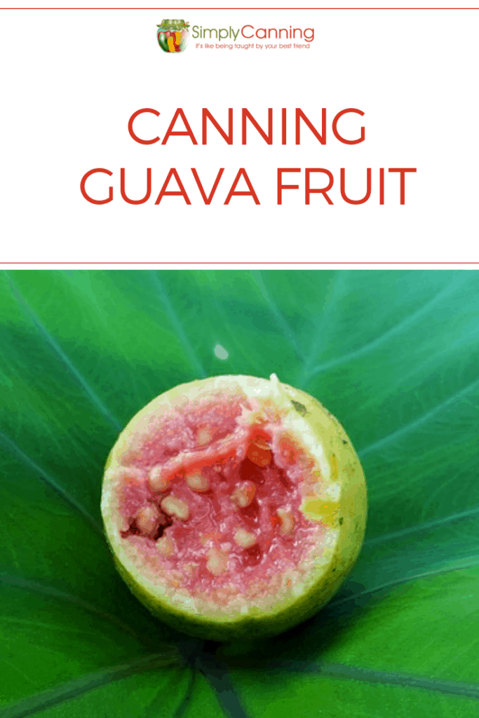 Canning guava fruit pin