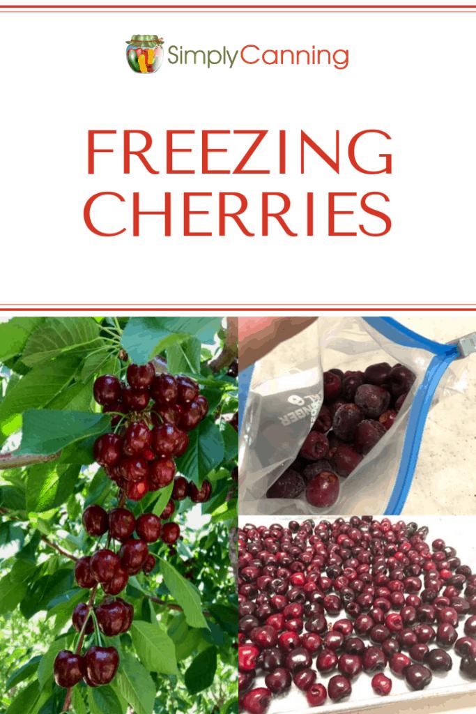 Freezing cherries pin1