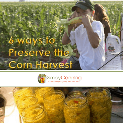 Little boy munching on a fresh corn cob with a cornfield behind him.