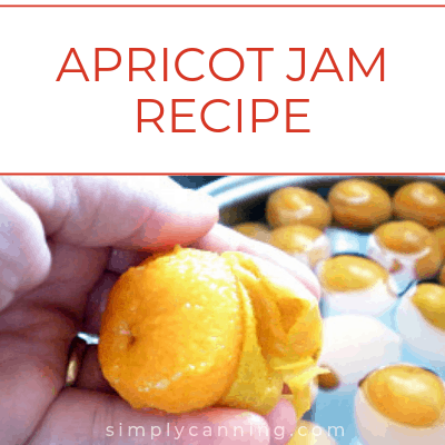 Peeling a fresh apricot for canning.