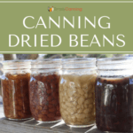 4 jars of home canned dried beans. Pinto beans, red beans, northern beans, and black beans.