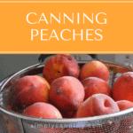A basket of bright fresh peaches.