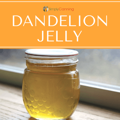 Golden jar of dandelion jelly sitting in the windowsill.