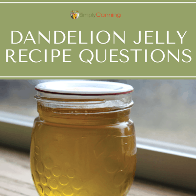 I got these two excellent questions from a reader about my dandelion jelly recipe. Tune in and learn about this jelly that my son thought was honey!