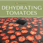 Rows of dried red tomato slices on the dehydrator trays.