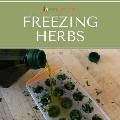 Pouring olive oil into icecube trays filled with chopped herbs.