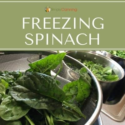Rinsing spinach in the sink.