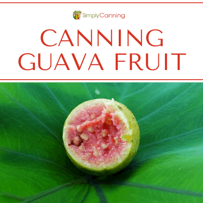 canning guava fruit