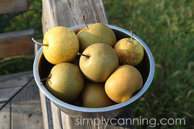 A bowl filled with various Asian pears.