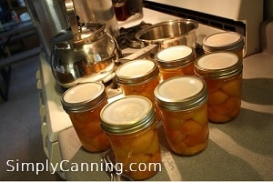 canning apricots sc