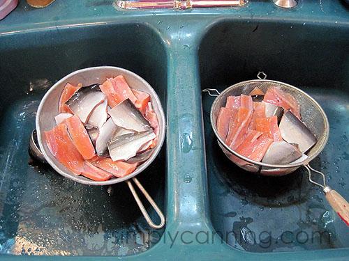canning fish5