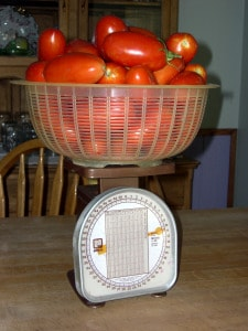 canning tomatoes scale