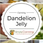 dandelion jelly pin
