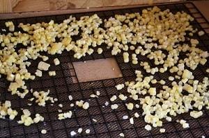 dehydrating corn on trays