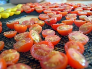 dehydrating food tomatoes