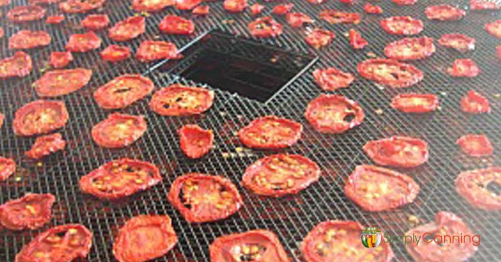 Dried tomato slices on the dehydrator trays.