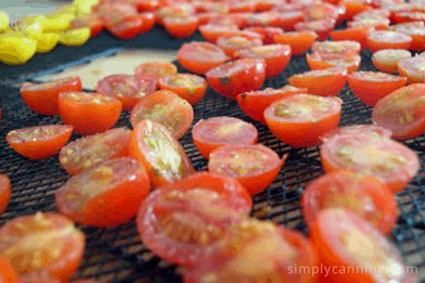 dehydrating vegetables