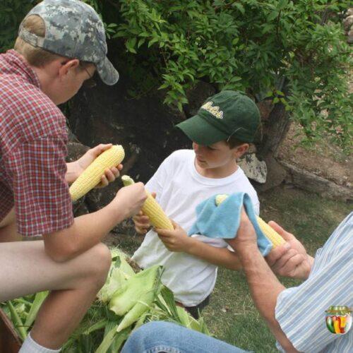 Sharon's husband and sons shucking corn in the backyard.