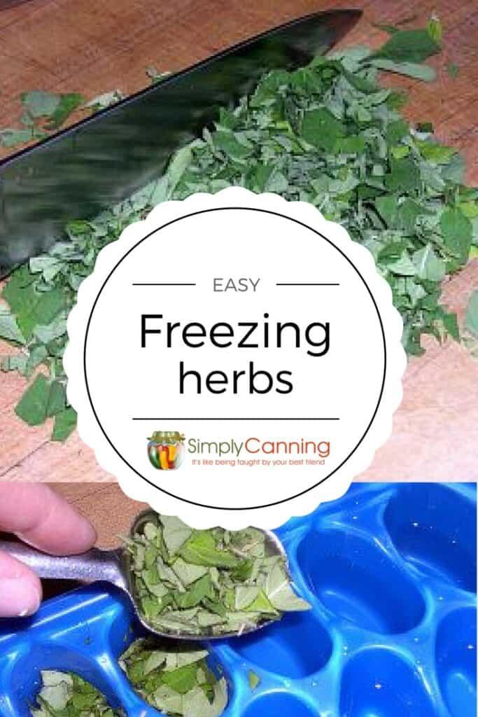 freezing herbs pin