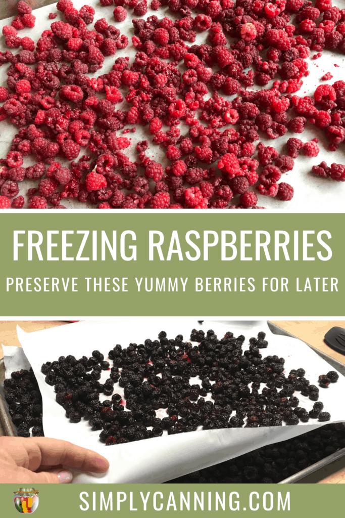 Freezing Raspberries