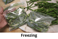 Packing bags with green beans for freezing.