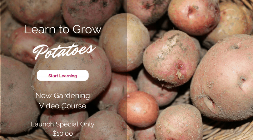 Learn how to grow potatoes. New gardening video course. Start learning.