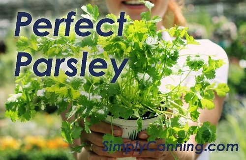 A woman holding a container of parsley plants.