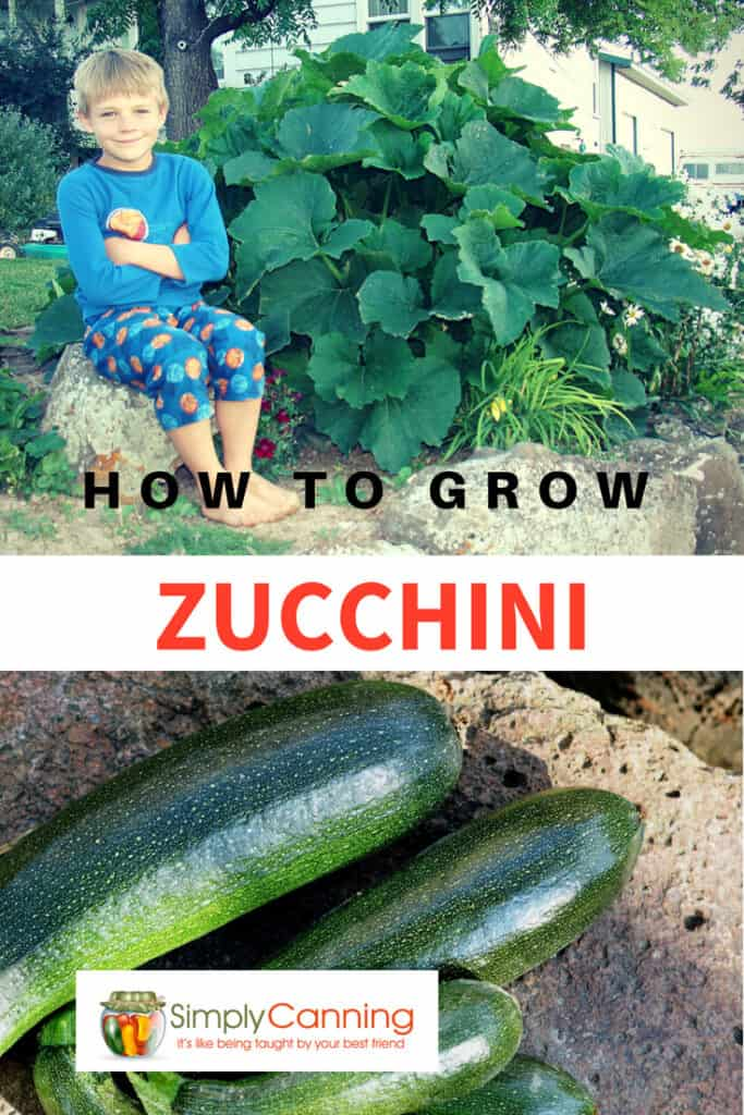 how to grow zucchini pin