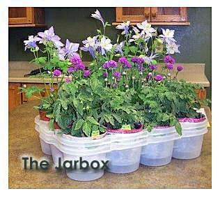 jarbox plants