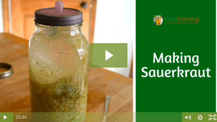 A large jar of sauerkraut covered with brine linking to the member lesson.
