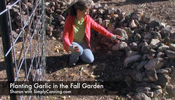 planting garlic capture