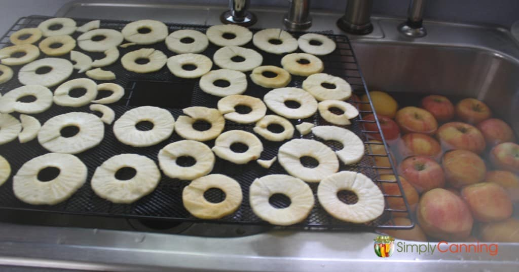 Rings of fruit on a dehydrator tray next to a sink filled with fresh apples.
