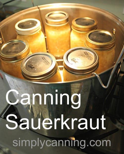 Jars of sauerkraut in a canner.