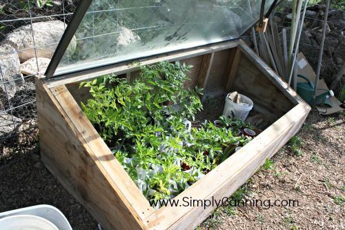 starting tomatoes hardening window box