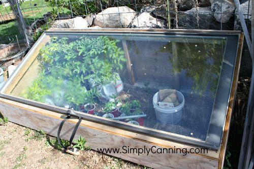 starting tomatoes hardening window closed
