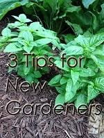tips for new gardeners